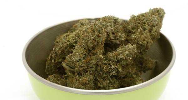 marijuana light legale in italia