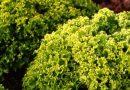 Salmonella contaminazione possibile da insalata