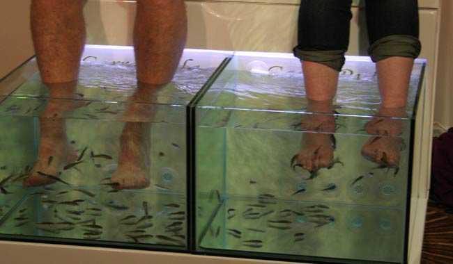 Pedicure con i pesci donna costretta ad amputare le dita