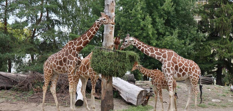 Germania incredibile appello di uno zoo in crisi