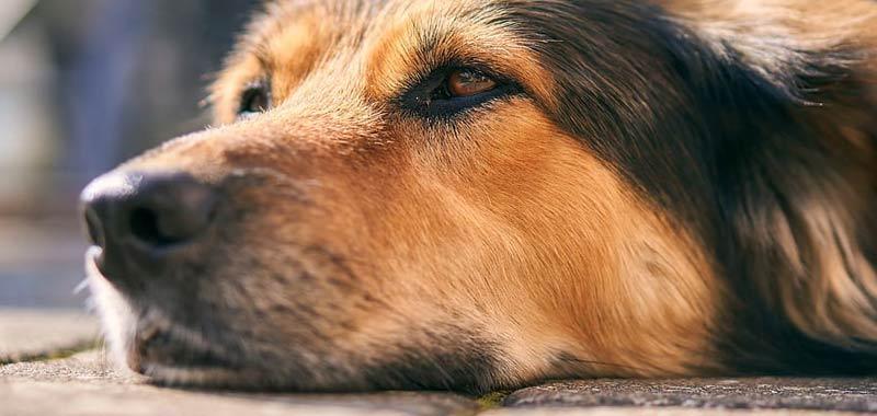 Ricercatori nuova scoperta sul perche del naso bagnato dei cani