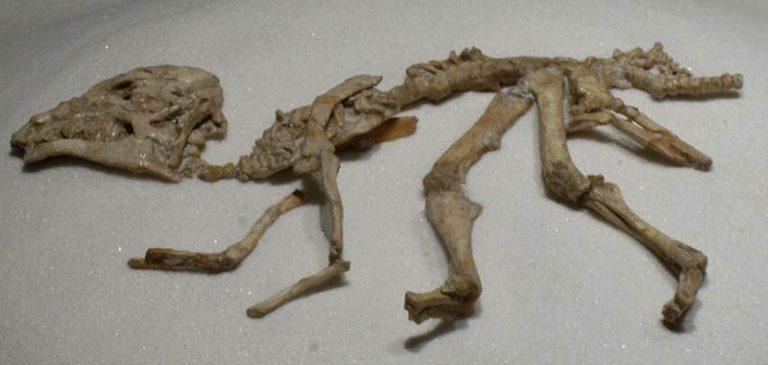 Ragazzino scopre fossili di dinosauri