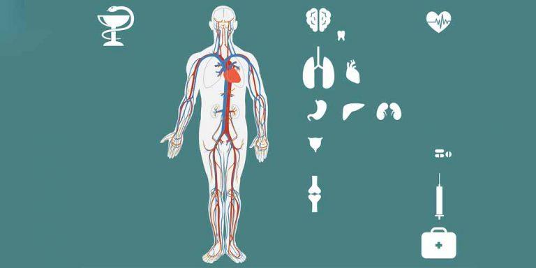 Fegato Grasso: Una malattia che può essere confusa facilmente